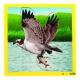 Puzzle L'aigle