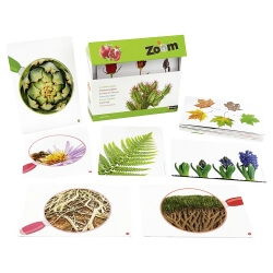 Quelle plante