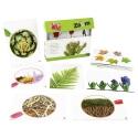 Quelle plante ? Découvrir le monde végétal