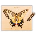 Puzzle à boutons Papillon