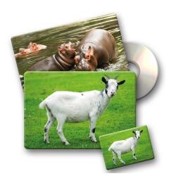 Imagier sonore des animaux